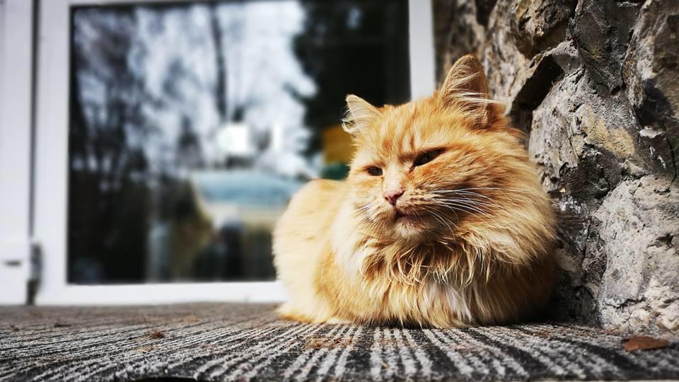kerti terápia a macskában)