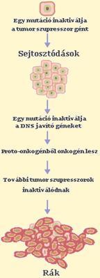 rák genetikai mutációi emberekben)