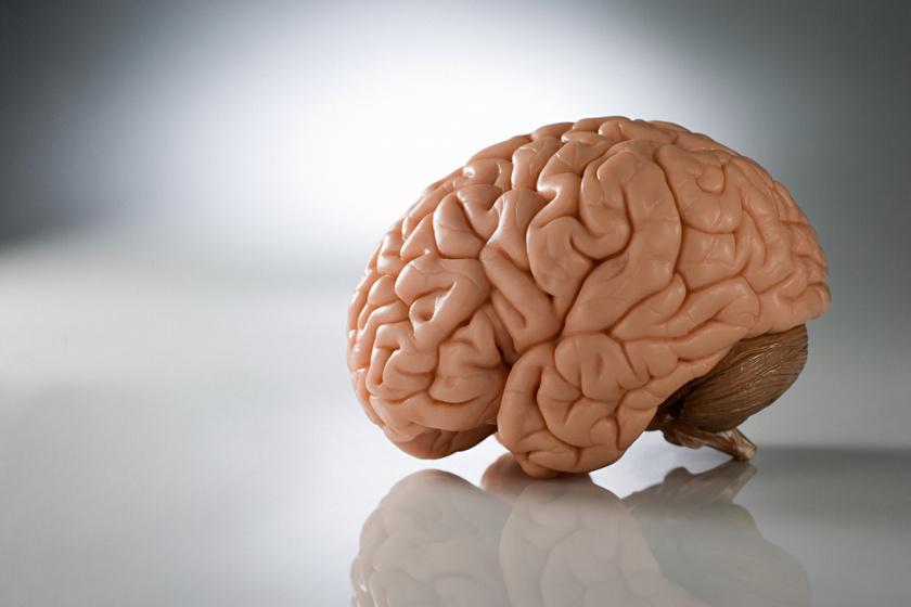 vigyázat, paraziták! - ködpiszkáló Típusú emberi agyi paraziták