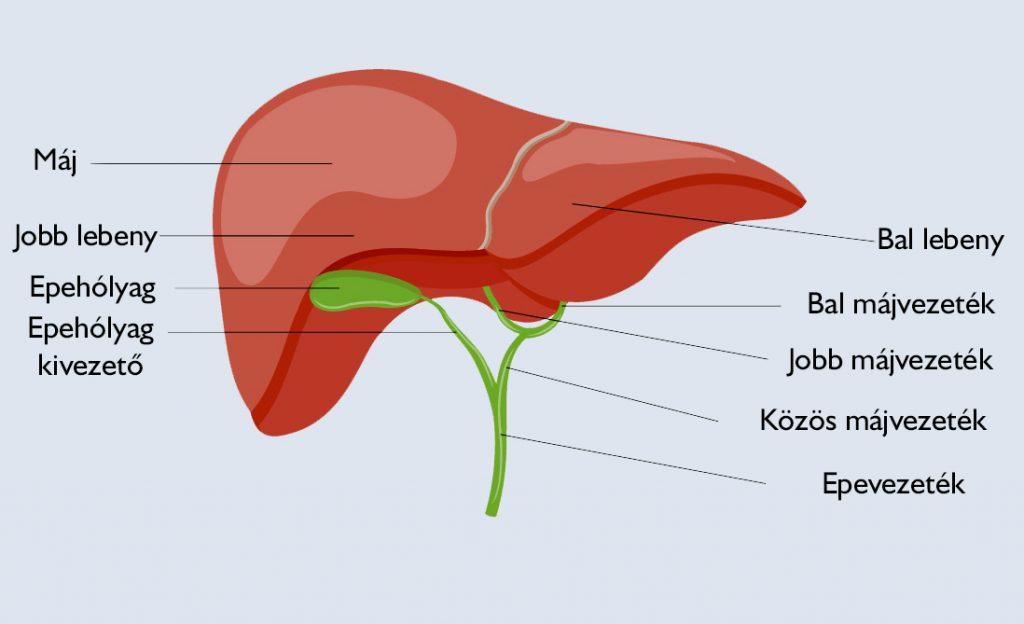 a máj zsíroktól való tisztítása gyomorrák nincsenek tünetei