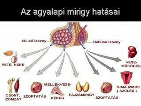 amely az agyalapi mirigy rákja hosszú távú giardia tünetek
