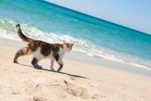 Giardia katt symtom - podkedd.hu, Giardia katt symptom