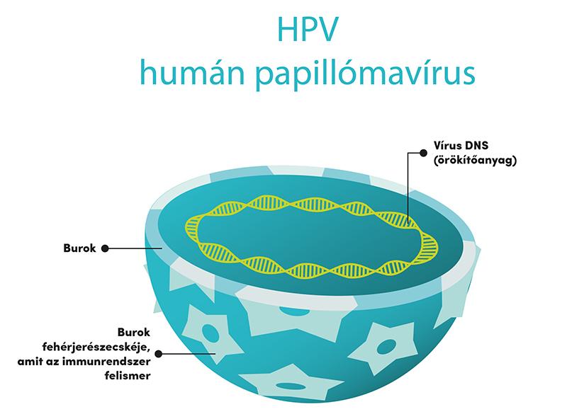 humán papillomavírus fertőzés meghatározása)