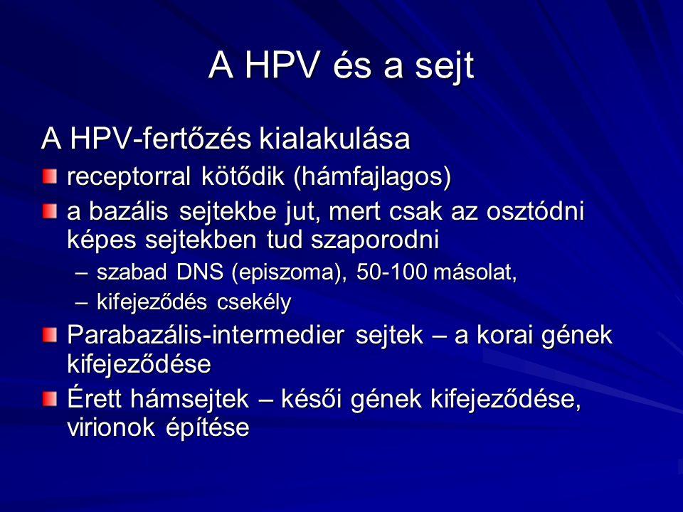 humán papilloma gének)