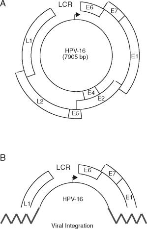 papilloma vírus genomja 42)