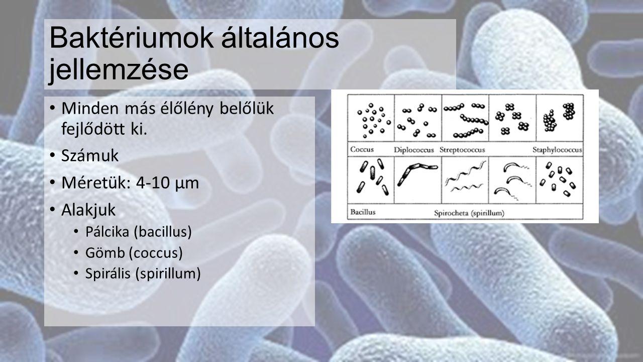3 közös alakzatok Baktériumok