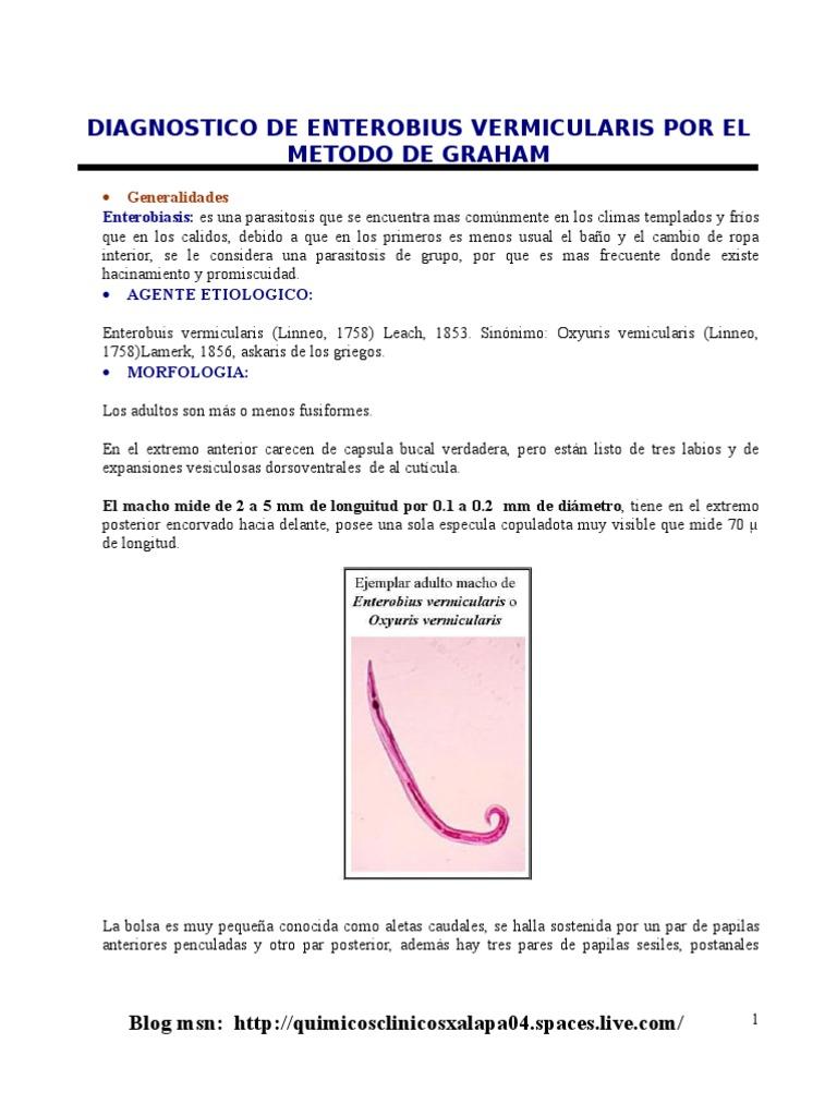 enterobius vermicularis recept