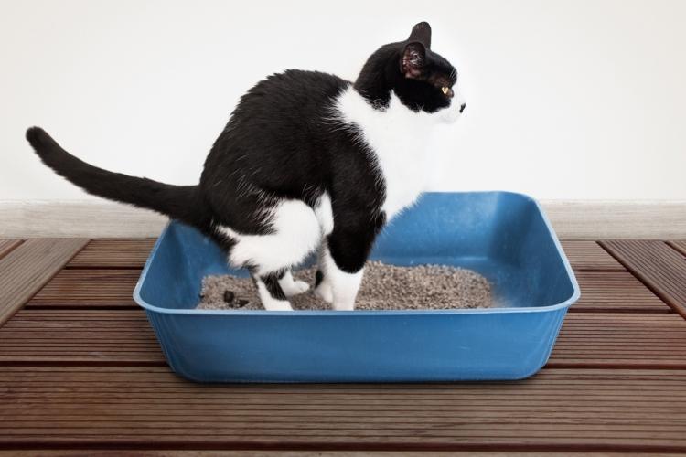 macska férgek kezelése