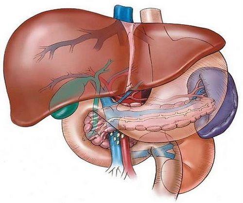 Giardiasis kód. Giardia kod pasa simptomi