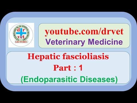 a fascioliasis patomorfológiája lapos talpi szemölcsök kezelése