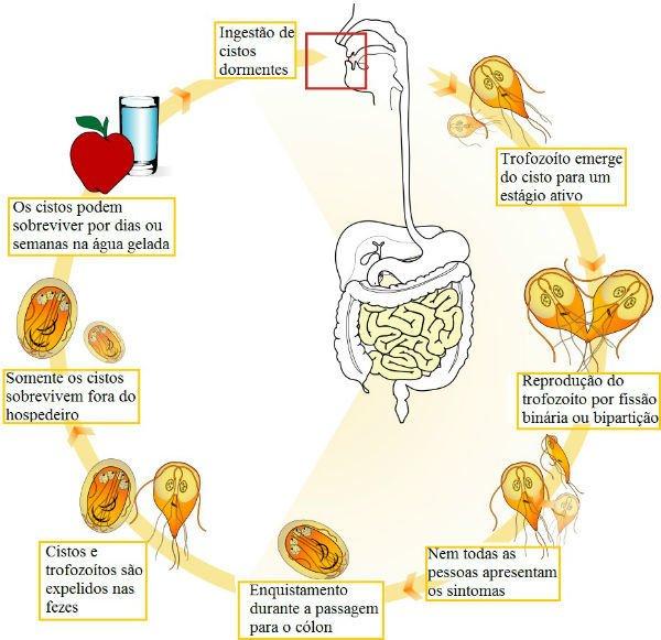 a giardiasis tünetei serdülőknél)