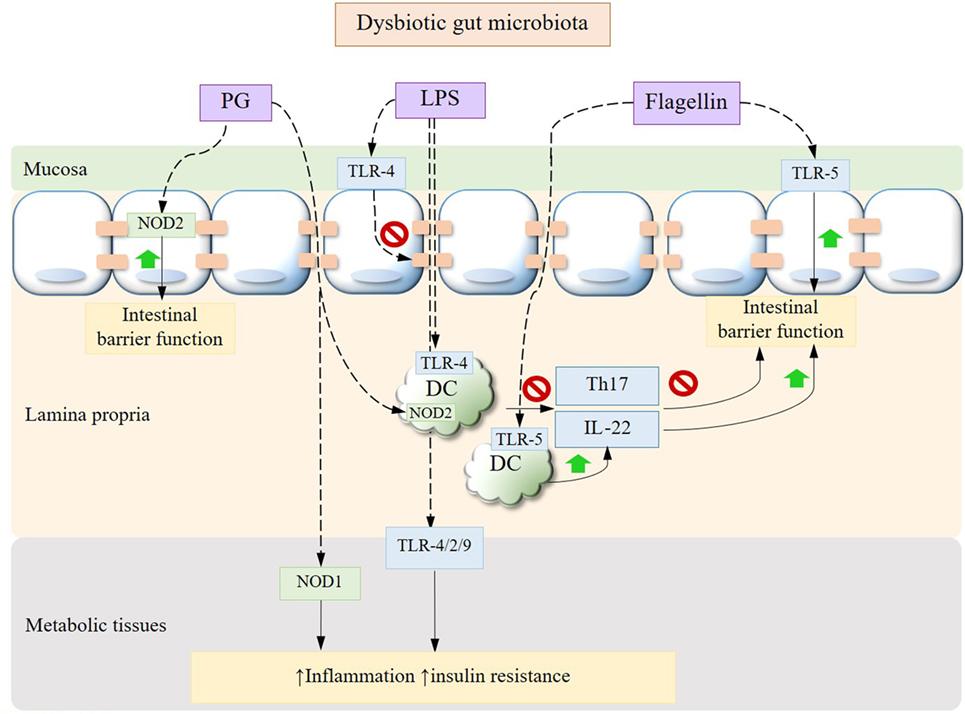 mikrobiota dysbiosis