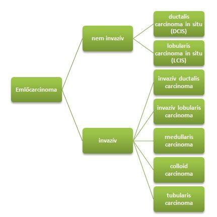 intraductalis papillomatosis jelentése papilloma vírus csecsemőknél