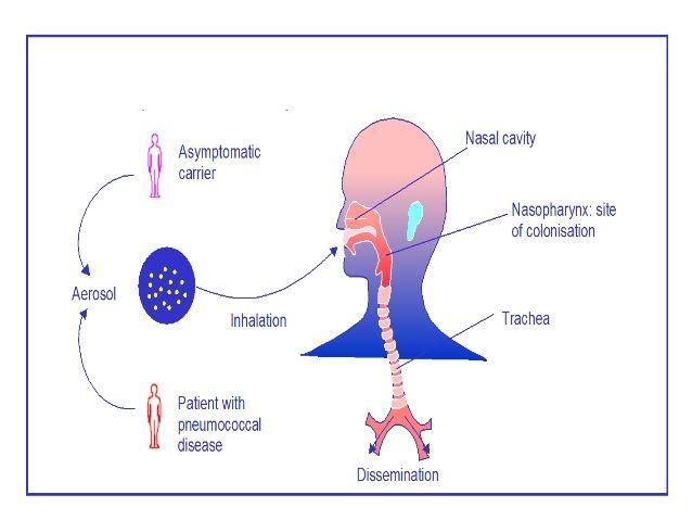 rák lymphoma hodgkin)