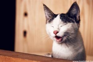 Giardiosis kutyában és macskában