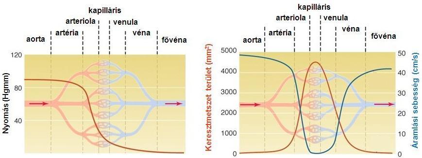 antitestek a kerek spirál ellen
