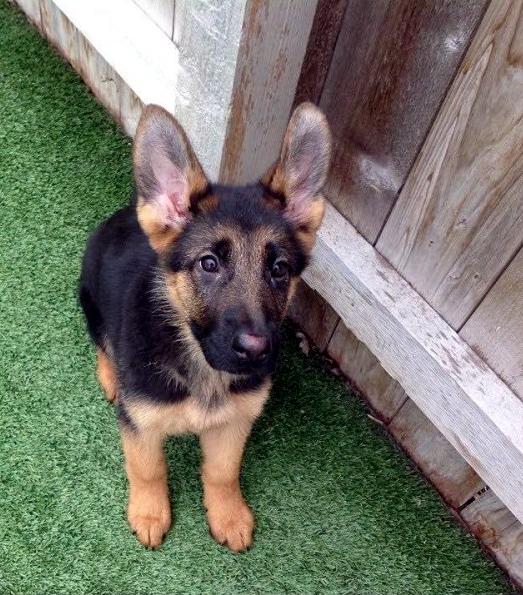 A bélférgesség tünetei és kezelése kutyáknál - HáziPatika