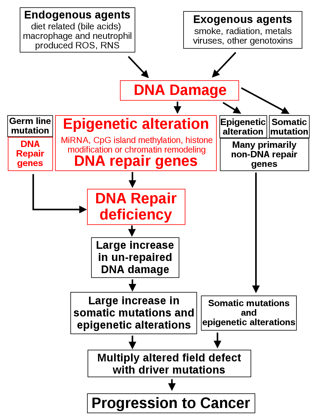 endometrium rákos kor