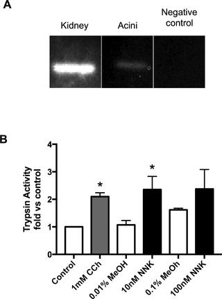 botulinum toxin nikotin patkány