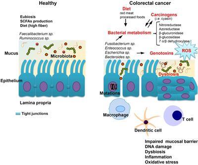 hpv vakcina hosszú távú hatásai papillomavirus miehella