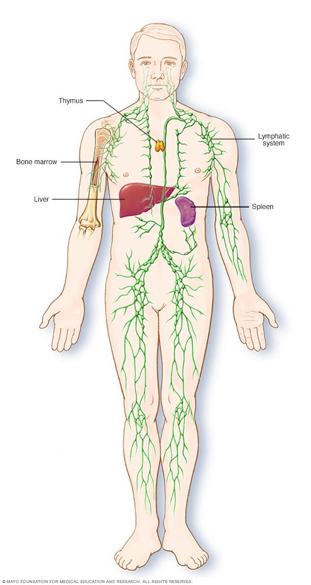 Amit a limfómáról tudni érdemes