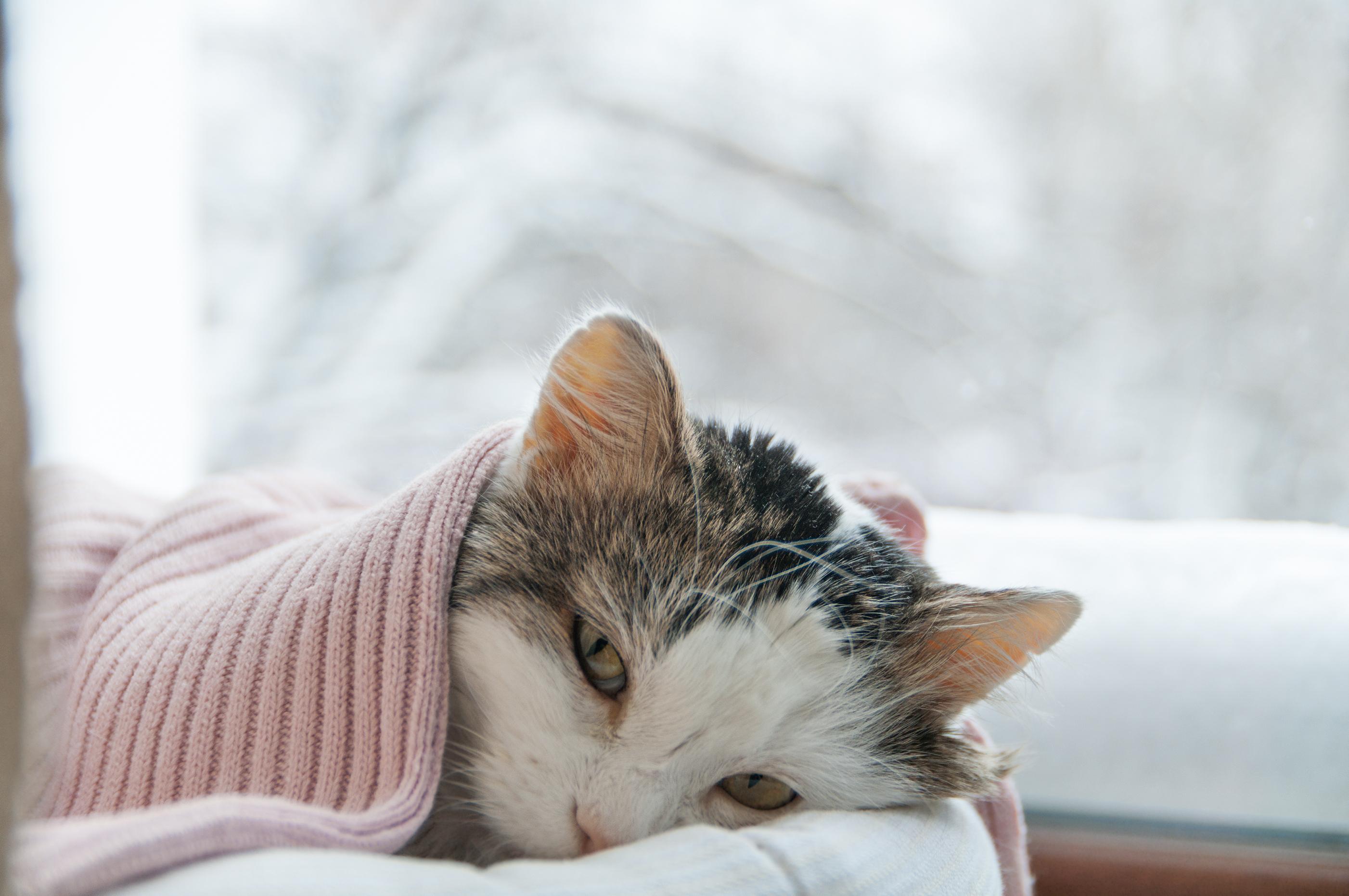 tünetek férgek macskáknál)