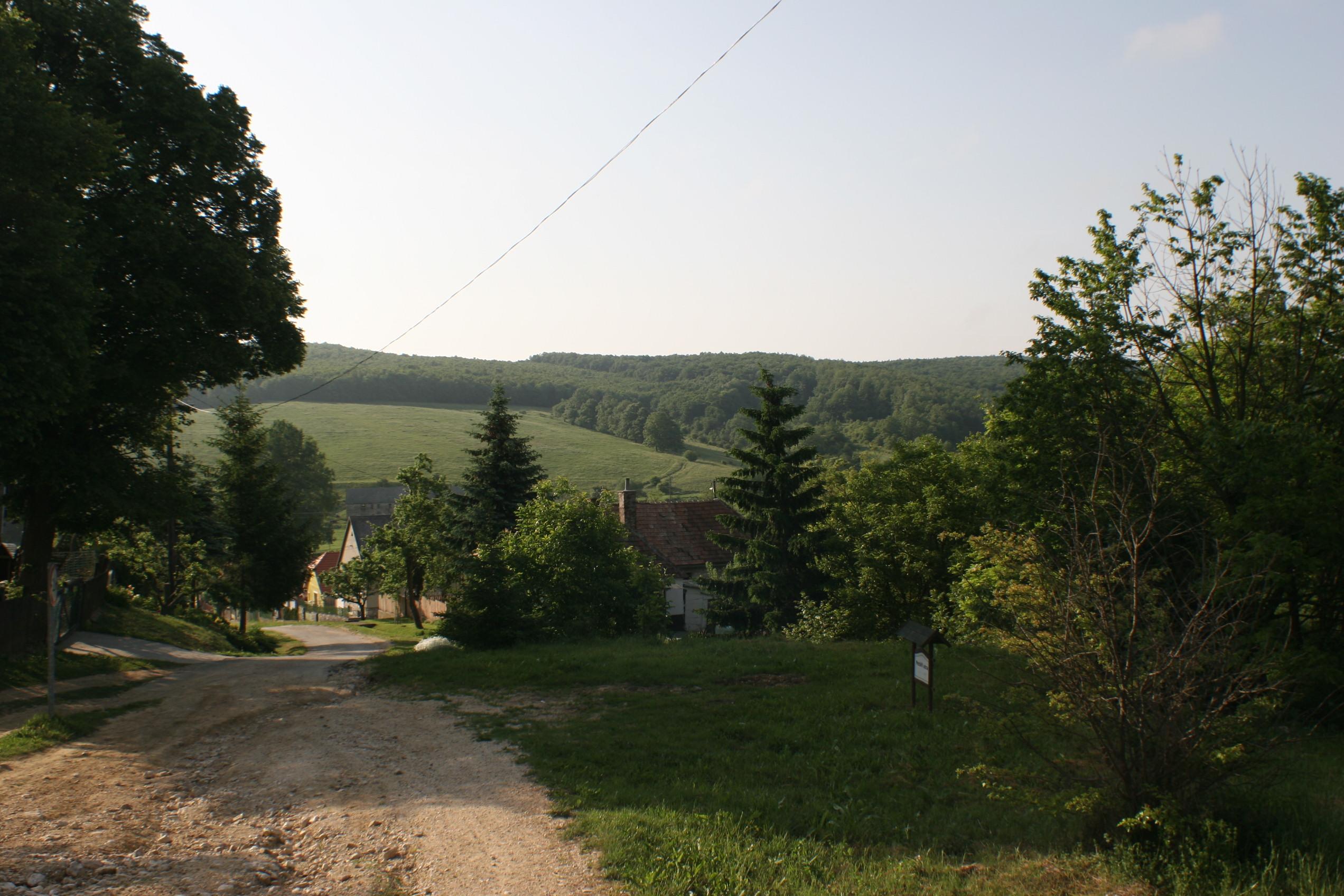 borjúparaziták)