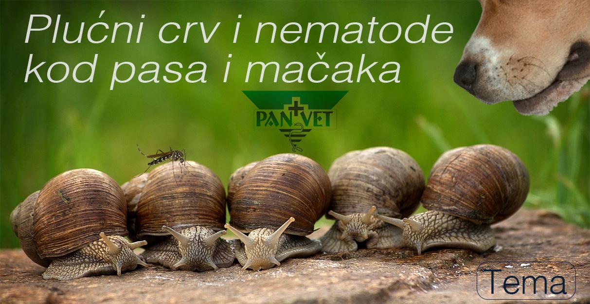 plucni parazita kódú pasa