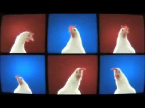 csirkék belső parazitái)