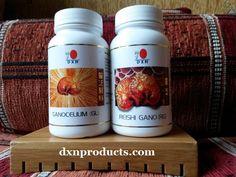 ganoderma méregtelenítő