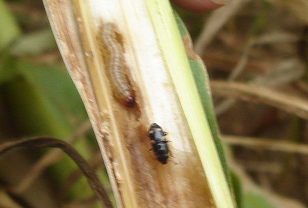 Válogatós rovarok
