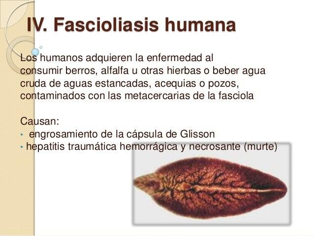 Invazív betegségek - Típusok Fascioliasis epizootológiai adatok