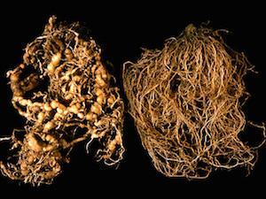 papilloma vírus hpv 45 szemölcsök és nemi szemölcsök orvossága