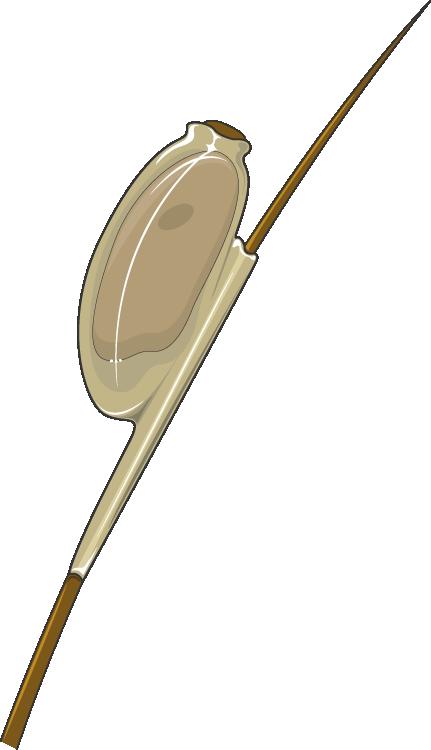 giardia ag scaun küldetés
