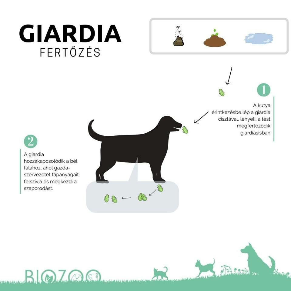 giardia tünet kutyáknál