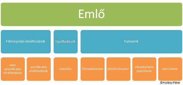 intraductalis papilloma a mellben