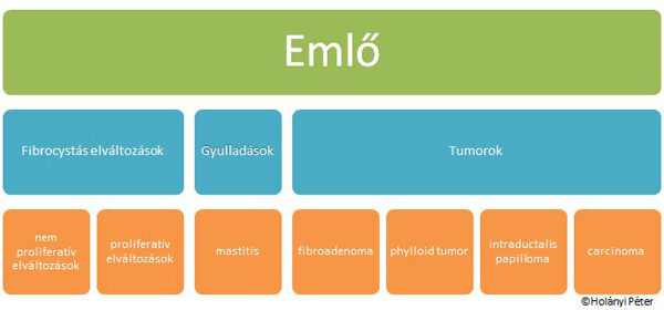 intraductalis papillomatosis jelentése férgek orvosilag