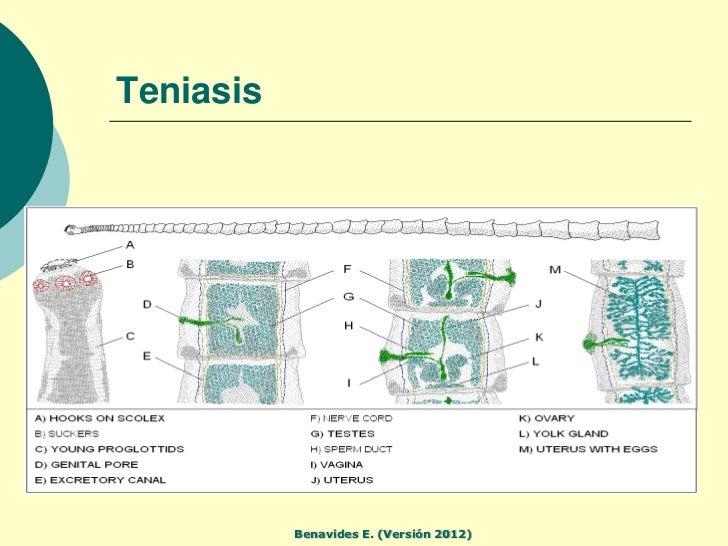 A Magyar Tudományos Akadémia Tihanyi Biológiai Kutatóintézetének Évkönyve, - REAL-J