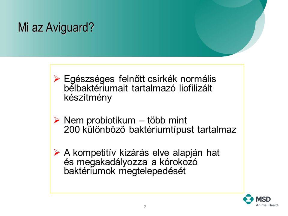 liofilizált baktériumok)