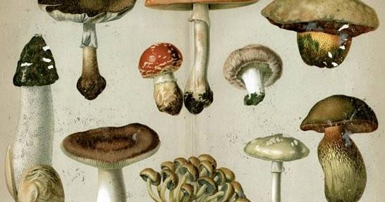 típusú ehető gombák
