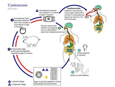 vermigális pinworm kezelés minden parazitát elpusztító tabletta