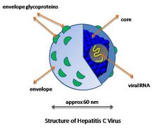 vírus z ovojnico kerek közeg férgekkel