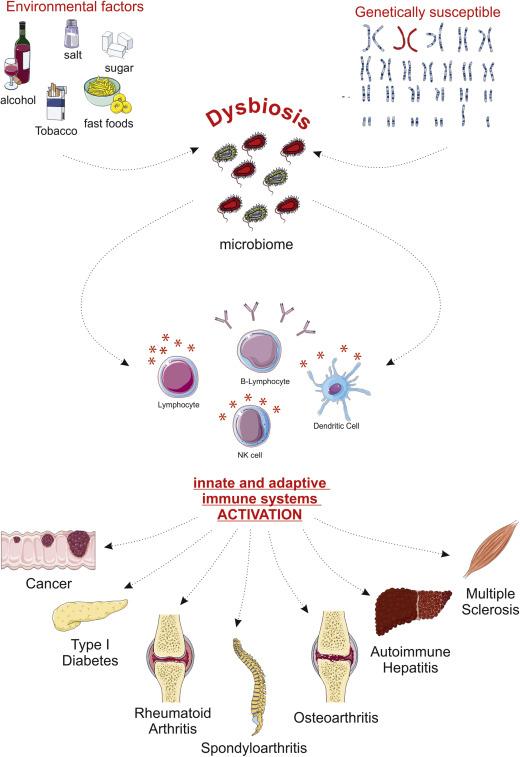 c-vitamin dysbiosis