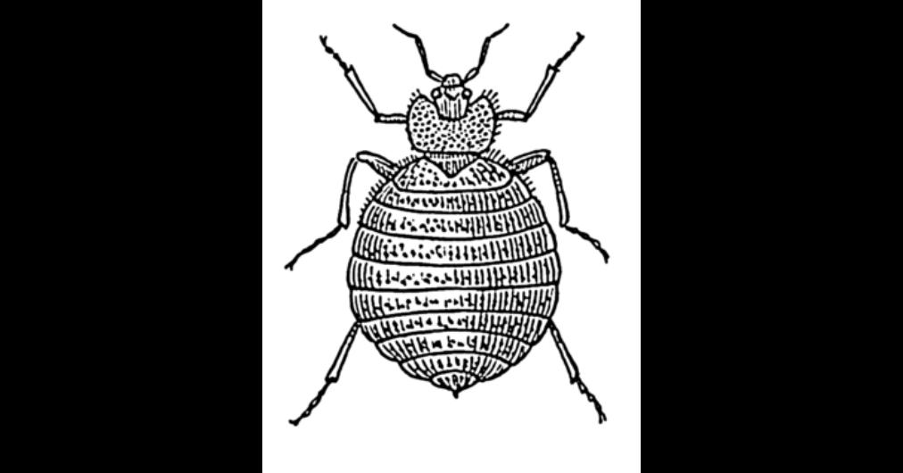 parazita elváltozások)