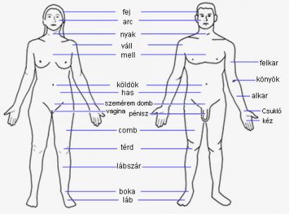 emberi szolgák típusú papillomavírus