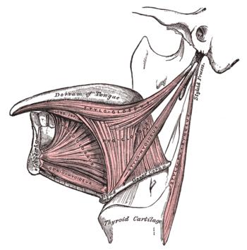 a szájnyálkahártya szemölcsei
