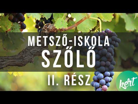 féreg a szőlő