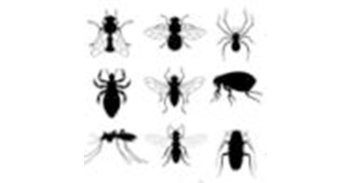 parazita láz bogarak)