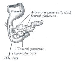 lccl parazita fehérjék apicomplexan parazita organizmusok termelnek