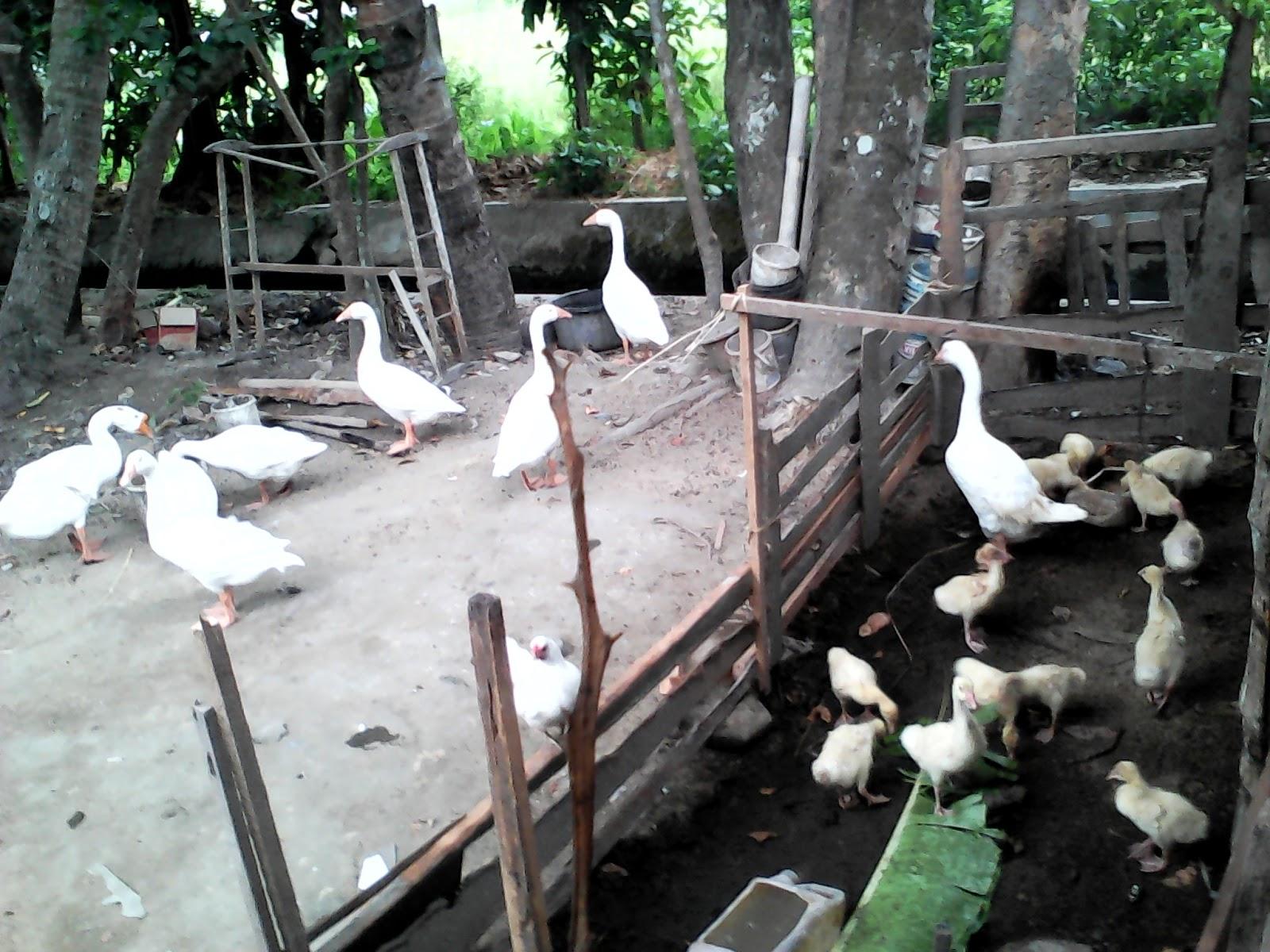 Kerepes-Vet Állatgyógyászati Központ. » Echinococcosis